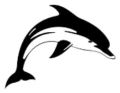 Dolphin 8 Decal Sticker