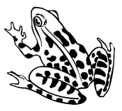 Frog 1 Decal Sticker