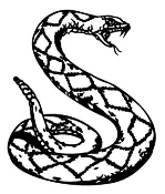 Rattle Snake Decal Sticker