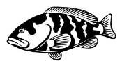 Grouper Decal Sticker