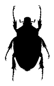 Beetle v2 Decal Sticker
