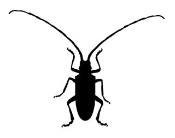 Beetle v6 Decal Sticker
