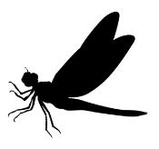 Dragonfly 3 Decal Sticker