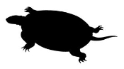 Turtle Silhouette 3 Decal Sticker