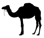 Camel  Silhouette v1  Decal Sticker