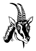 Antelope Head Decal Sticker