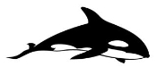 Killer Whale 1 Decal Sticker