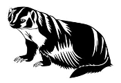 Badger Decal Sticker