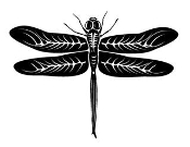 Dragonfly 4 Decal Sticker