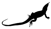 Lizard Silhouette 13 Decal Sticker