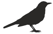 Blackbird Silhouette Decal Sticker