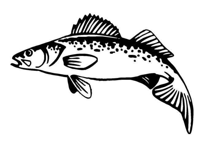Walleye Clipart The Cliparts Databases Walleye Coloring Page
