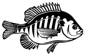 Blue Gill Decal Sticker