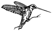 Hummingbird v1 Decal Sticker