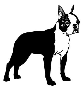 Boston Terrier v2 Decal Sticker