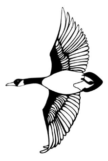 Goose 3 Decal Sticker