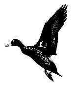Duck 7 Decal Sticker