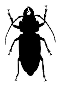 Beetle v3 Decal Sticker