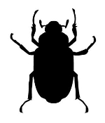 Beetle v5 Decal Sticker