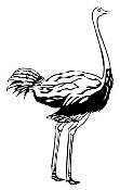 Ostrich Decal Sticker