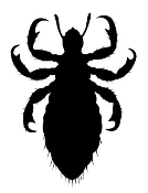 Lice Decal Sticker