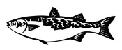 Fish v7 Decal Sticker