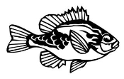 Blue Gill v2 Decal Sticker