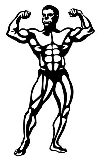 Bodybuilder 1 Decal Sticker
