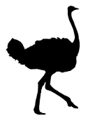 Ostrich Silhouette 1 Decal Sticker
