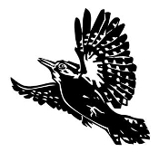Spotted Woodpecker Decal Sticker