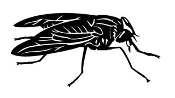 Horse Fly Decal Sticker