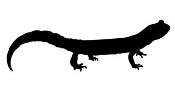 Lizard Silhouette v19 Decal Sticker