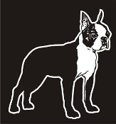 Boston Terrier v3 Decal Sticker