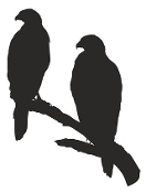 Eagles Silhouette 5 Decal Sticker
