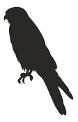 Falcon Silhouette Decal Sticker