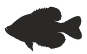 Crappie Silhouette Decal Sticker