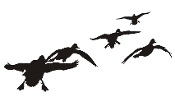 Ducks Flying Silhouette v5 Decal Sticker