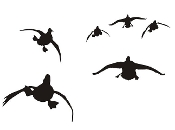 Ducks Flying Silhouette v6 Decal Sticker