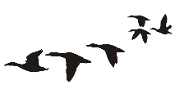 Ducks Flying Silhouette v8 Decal Sticker