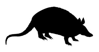 Armadillo Silhouette v2 Decal Sticker