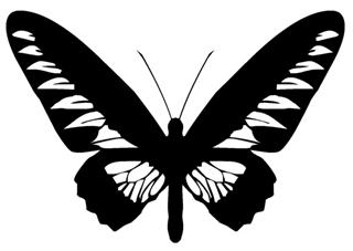 Butterfly v13 Decal Sticker