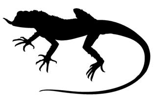 Lizard Silhouette v9 Decal Sticker